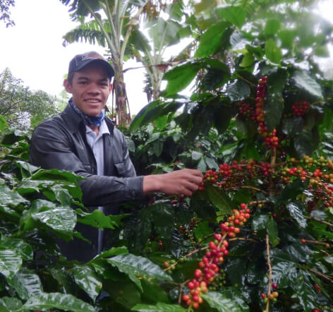 A smiling young man poses with a coffee bean plant filled with red coffee cherries