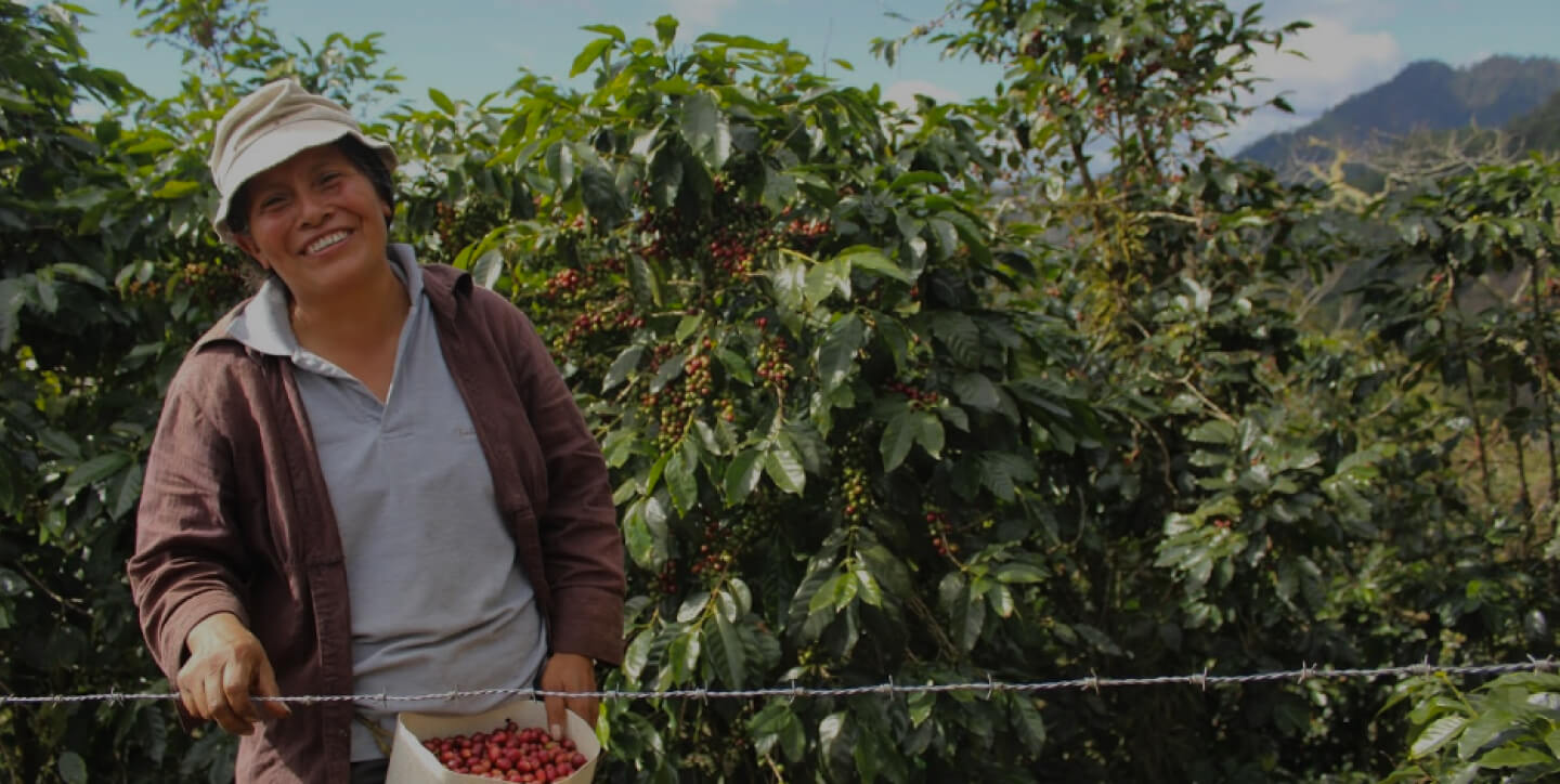 Smiling woman harvesting coffee beans